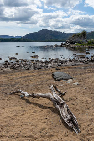 Driftwood at the beach of lough leane, Killarney national park, Ireland. Lonely beach with driftwood. Reklamní fotografie