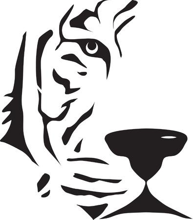 tiger white: In bianco e nero testa di tigre. Vettoriali