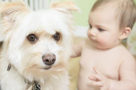 9 months old: Creo que es la bola m�o! 9 meses de edad del beb� y perro que juegan en el fondo blanco