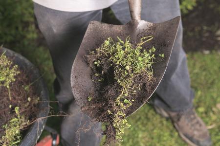 jardineros: Jardineros Foto de archivo