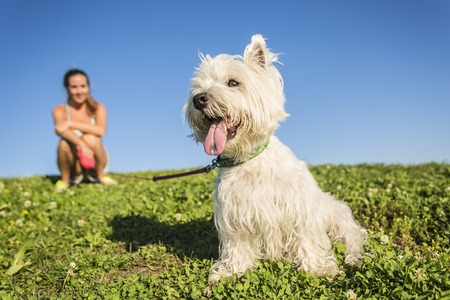 dog leashes: A portrait of beautiful girl keeping pretty white West Highland dog outdoor Stock Photo