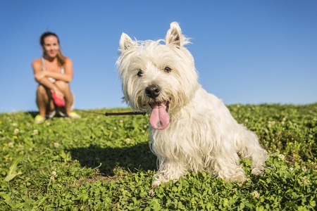 cute westie: A portrait of beautiful girl keeping pretty white West Highland dog outdoor Stock Photo