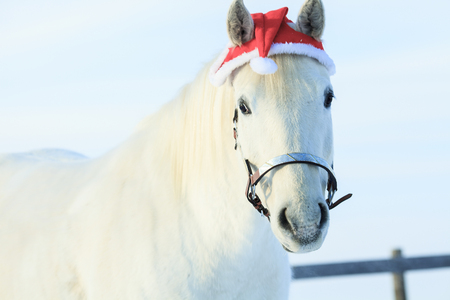 horse in snow: A horse with santa hat outside in winter season Stock Photo