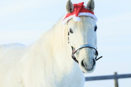 Een paard met kerstmuts buiten in de winter seizoen