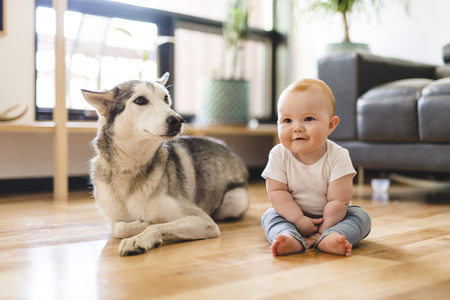 Baby girl sitting with husky on the floor Imagens
