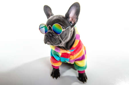 Black French bulldog puppy over a white background with funny glasses Stock Photo
