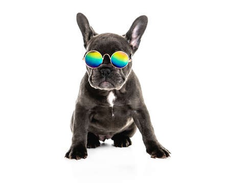 Black French bulldog puppy over a white background with funny glasses Archivio Fotografico