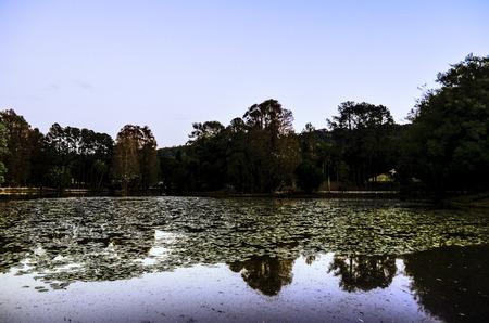 tree dweller: horizon