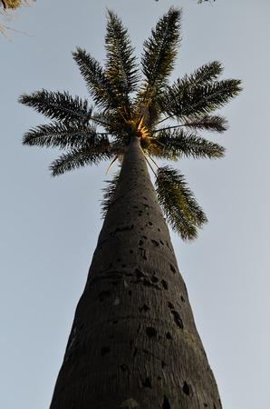 tree dweller: against point