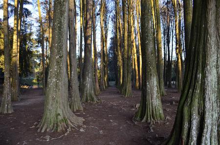 tree dweller: movie