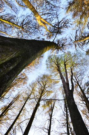 tree dweller: leader vertical