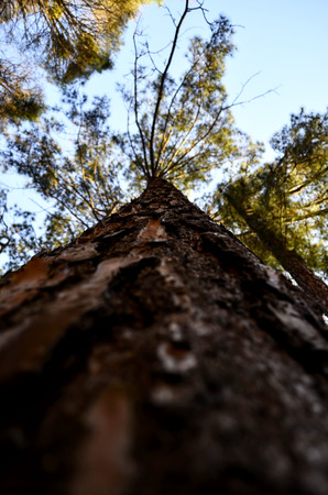 tree dweller: close and high