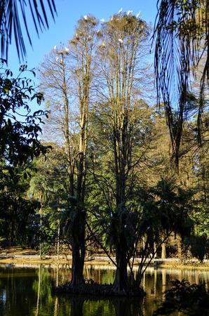 tree dweller: Tone Stock Photo