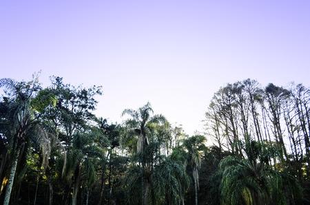 tree dweller: beyondndega