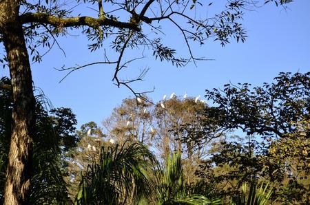 tree dweller: home ganas