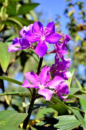 tree dweller: purple and p Stock Photo