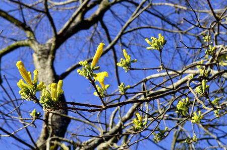tree dweller: yellow flowers close