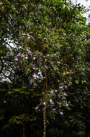 tree dweller: flowers