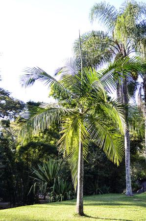 tree dweller: coconut