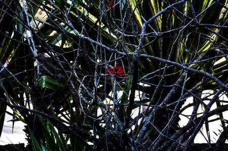tree dweller: red flower
