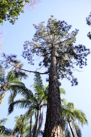 tree dweller: arm