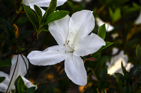 lake dweller: white flower