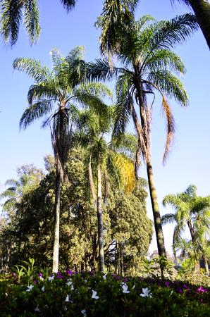 tree dweller: island