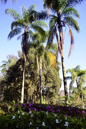tree dweller: colors Stock Photo
