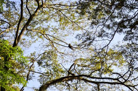 tree dweller: looking