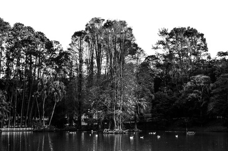 lake dweller: black and white