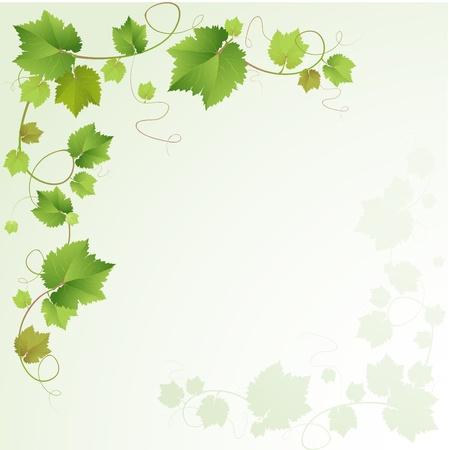 Grapes vine background  向量圖像