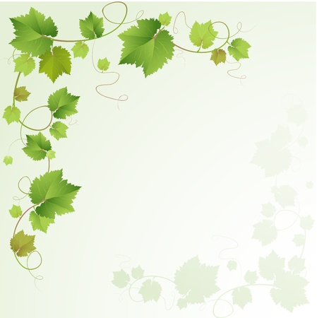 grapes on vine: Grapes vine background  Illustration