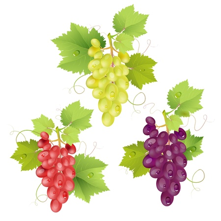 Three cluster of grapes