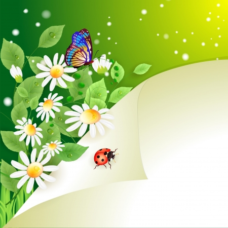 Summer background with daisies Vector