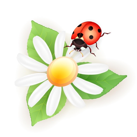 Lady bug with daisy Vector