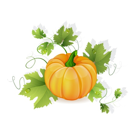 fall harvest: Orange pumpkin vegetable with green leaves Illustration