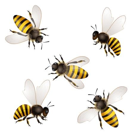 Set van bijen op wit wordt geïsoleerd
