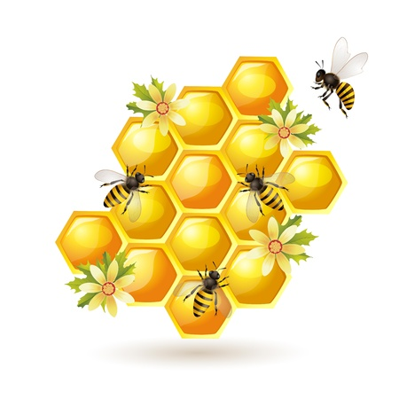Bees and honeycombs   isolated on white Vector