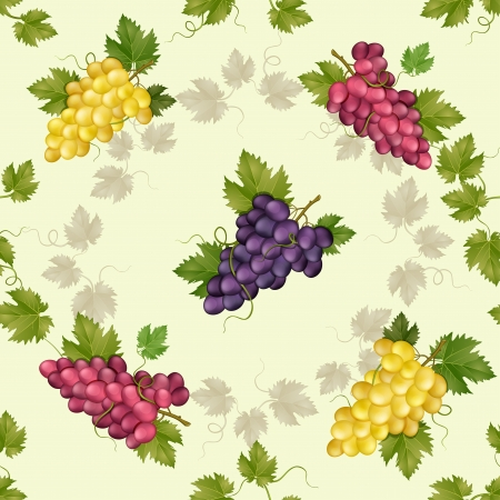 Seamless pattern with grapes and vine  Vector