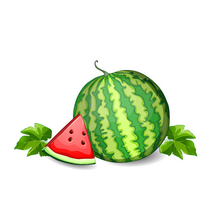 macro leaf: Watermelon isolated on white background