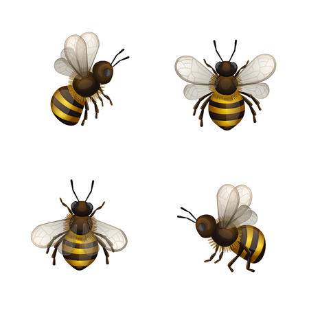 Set of bees isolated on white background.