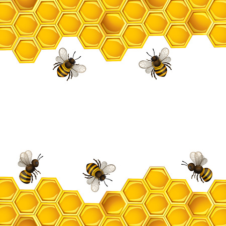 Bees and honeycombs design template Vector Illustration