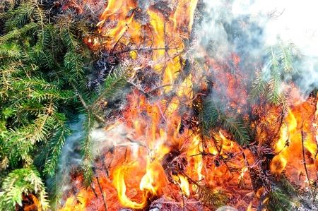 Bonfire with evergreen burning Stock Photo - 22159572