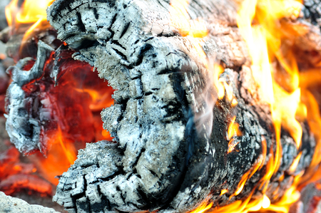 wood textures: Wooden log burning on campfire.