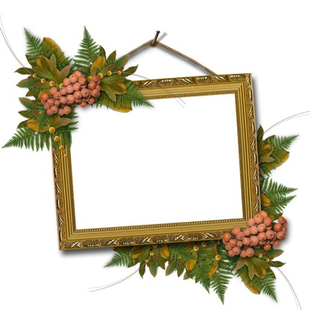 mountain ash: Picture gold frame with a mountain ash and bunch  Stock Photo