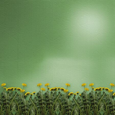 Green abstract background with flowers of dandelion photo
