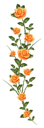 rose bush: pattern of painted roses on white isolated background
