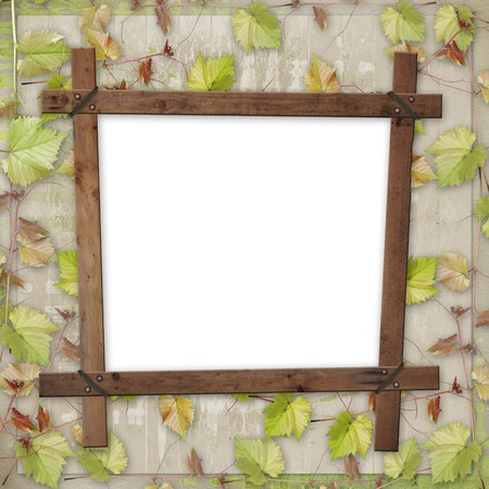 Wooden frame with a branch of the vine Stock Photo - 7612686