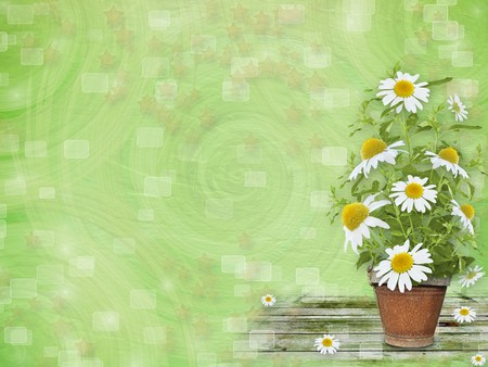 oxeye: Grunge paper with beautiful bunch of daisy for design