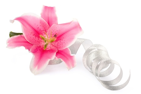 Beautiful pink lily flower with silver ribbon on the white isolated  background  photo